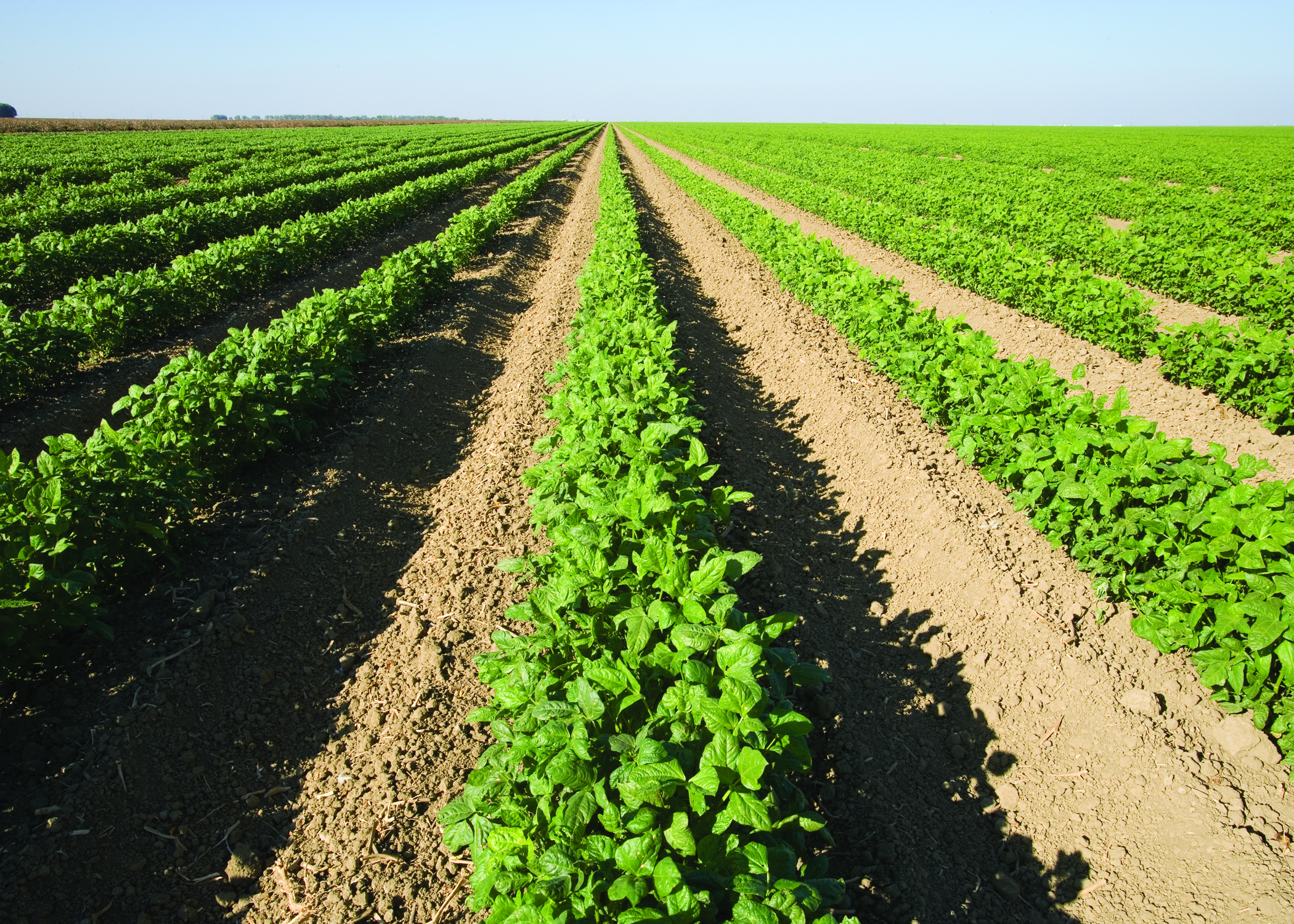 Row crops growing in California.
