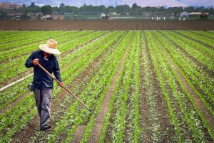 Farm workers farming