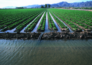 Drought water crops