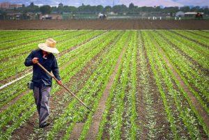 Farm workers farming